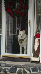 "Harry, the ""White Dog"" waiting to greet customers."