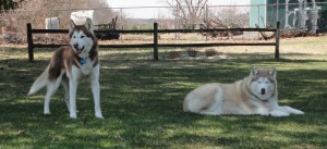 Bella and NanNuk are ready to spring into action!