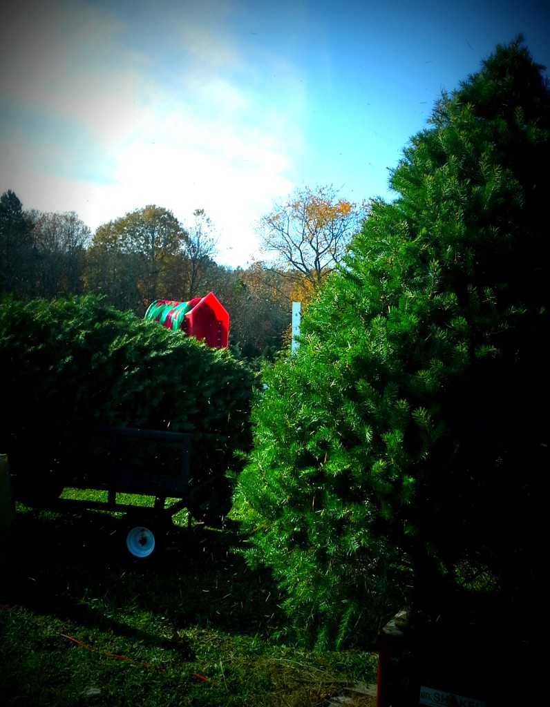 After we cut your tree, it's shaken and then wrapped in a net to make it easy to transport and get into your house.