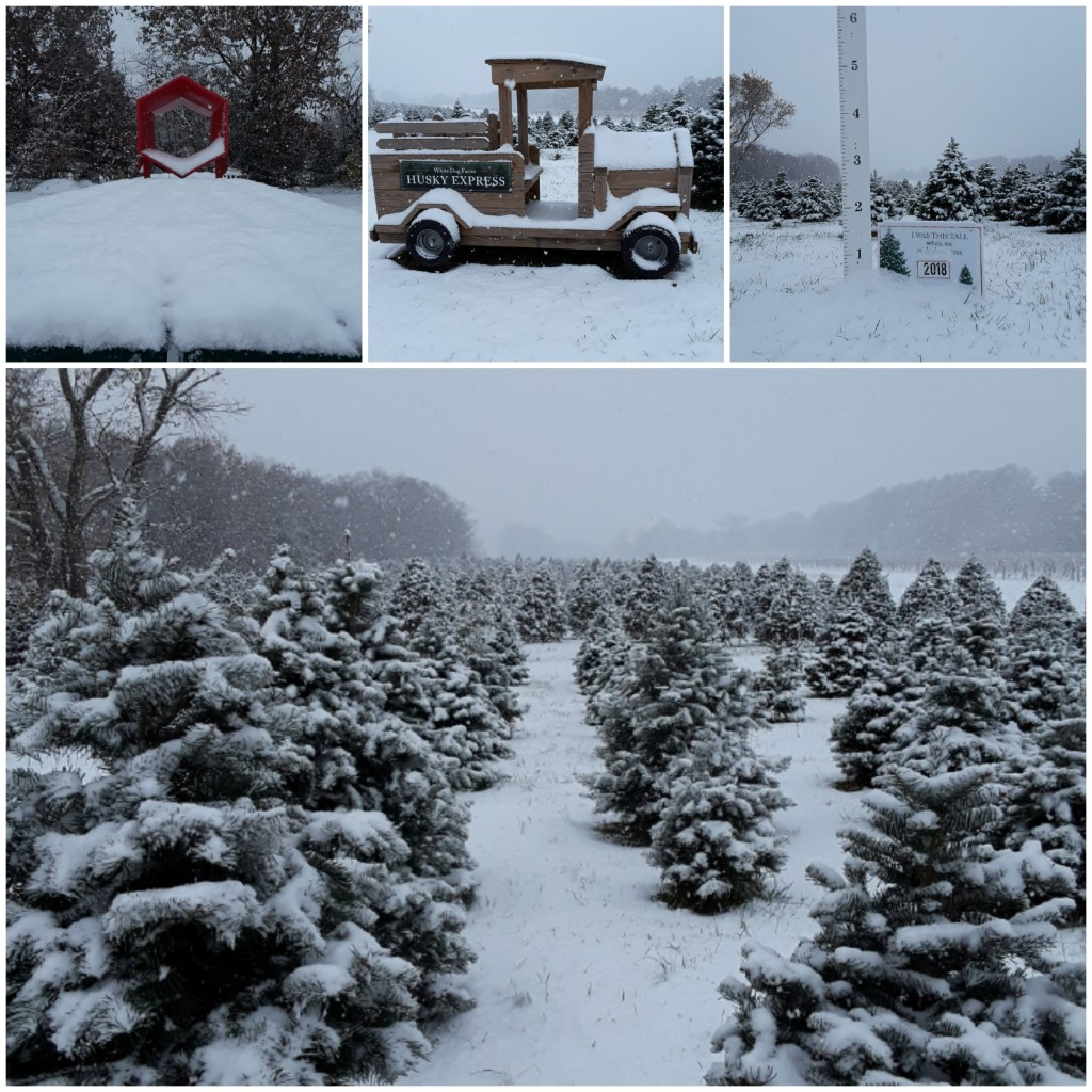 Here are a few pictures from our November snowstorm!