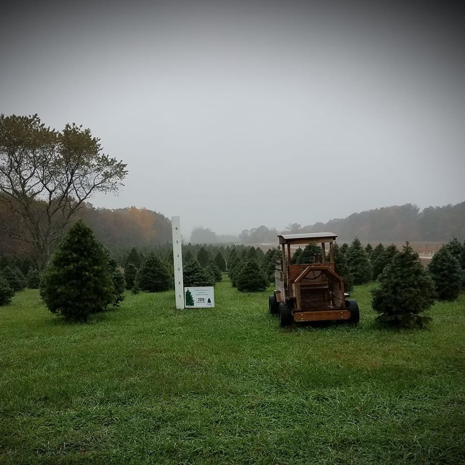 It's a little misty on the farm today!